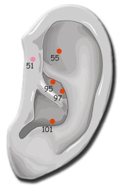 Akupunkturpunkte im Ohr
